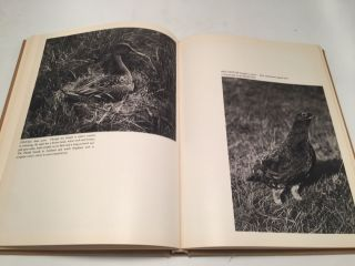 British Wild Life: A Selection from the National Collection of Nature Photographs